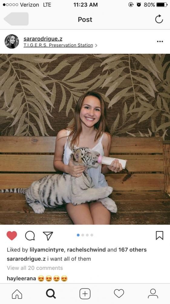Loving her time with the baby tiger, Sara Rodriguez smiles for the camera. Rodriguez met the tiger at a preservation in Myrtle Beach.